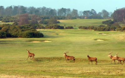 Aldeburgh wins Environmental Golf Club of the Year 2019